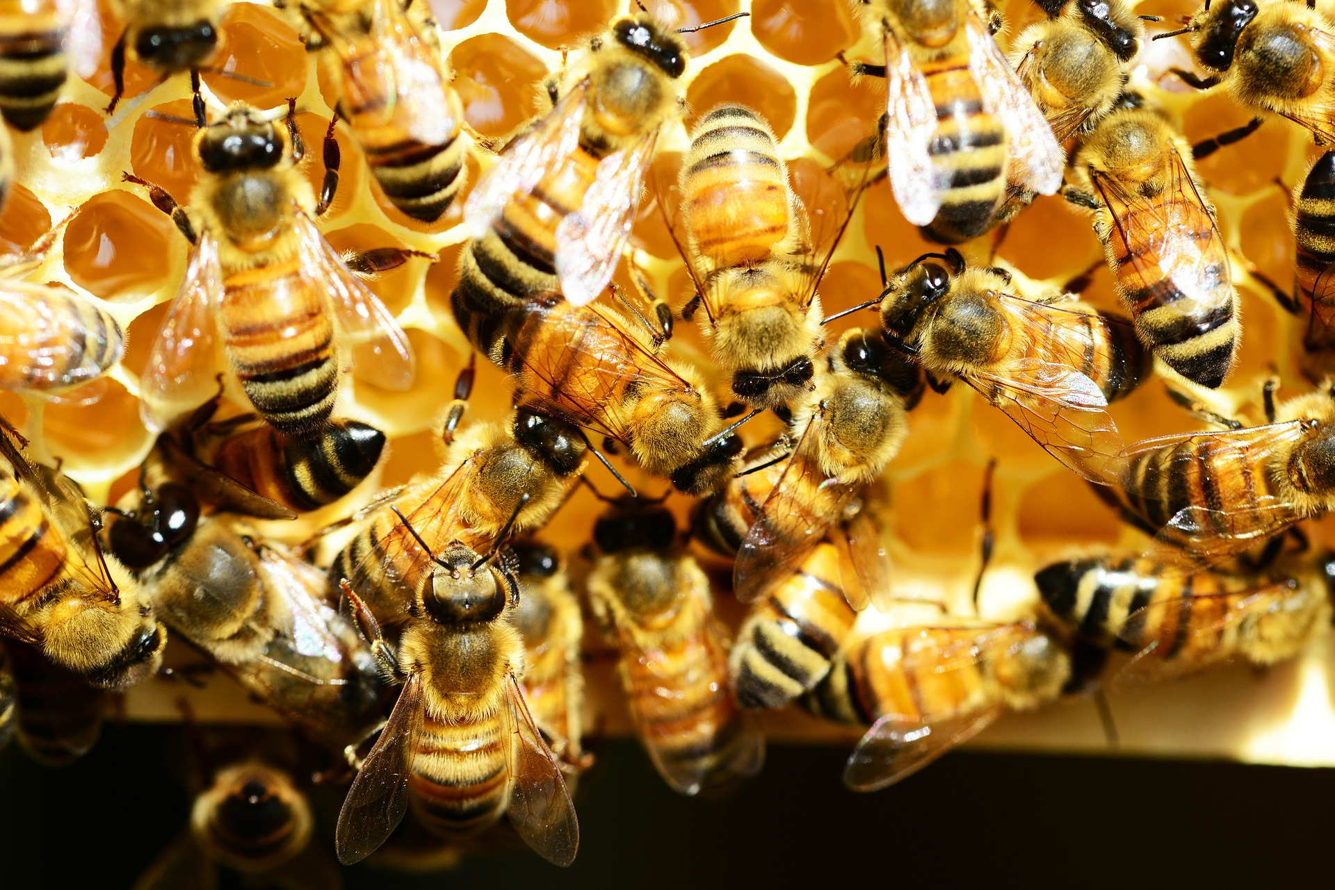 Slander and bad research: how are honeybees really treated?