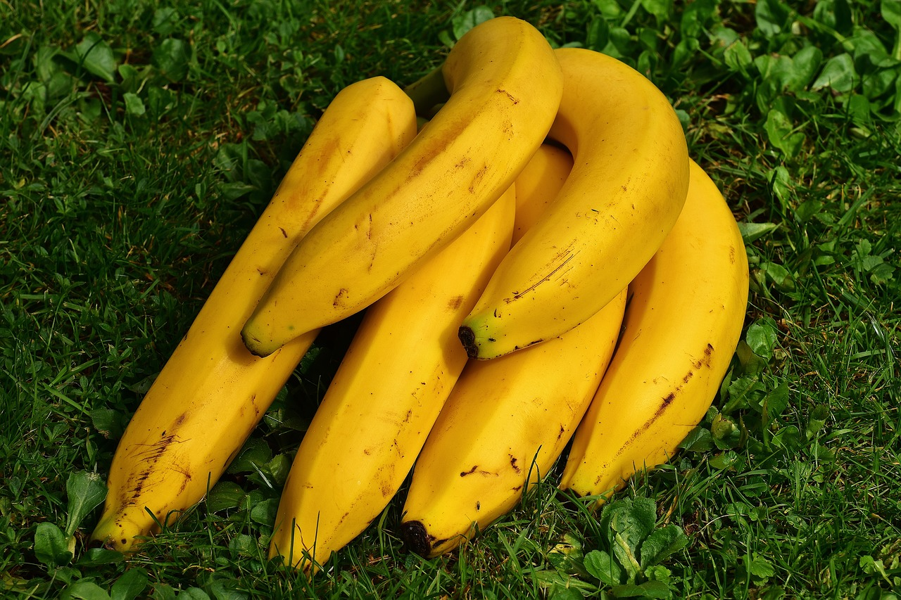 Monocropping pays its price: 100% of commercial bananas will be genetically modified